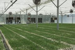 gutter-connect-linville-river-nursery