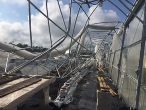 Damage to a Competitive Company's Greenhouse by Hurricane Irma